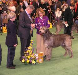 Merlin BOB Westminster 2005