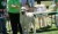 phoca_thumb_s_20150920-_DSC0587.jpg
