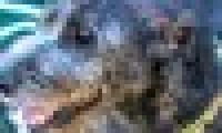 phoca_thumb_s_20150920-_DSC0627.jpg