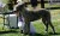 phoca_thumb_s_20150920-_DSC0367.jpg