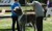 phoca_thumb_s_20150920-_DSC0565.jpg